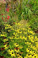 Colourful late summer garden border in a walled garden.