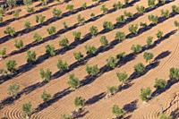 Dry farming, Torres del Segre territory, Baix Segre, Lleida, Catalonia, Spain, Europe.