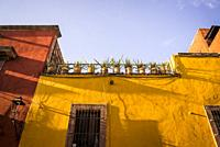 Potted plants on the roof of a house, San Miguel de Allende, a colonial-era city, Bajío region, Central Mexico.