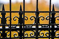 USA, WA, Seattle. Volunteer Park. Fall colors in the background of wrought iron fence.
