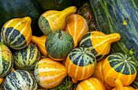 Gourds displayed in the Caserio (farm) produce market held on the last Monday of October in Gernika, Biscay, Basque Country, Spain.