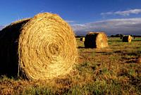 Hay rolls, Nisqually National Wildlife Refuge, Washington.