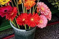 Colored Daisies Offered for Sale at an Outdoor Market, Displayed in Green Plastic Vases in Manhattan, NYC.