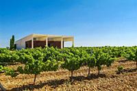 Vineyards. Bodega Belondrade, D.O. Rueda, ´Verdejo´ grape variety. Valladolid Province, Comunidad Autónoma de Castilla y León, Spain.