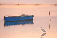 Great Egret at sunset in Deltebre, Catalonia.