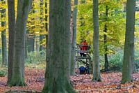 Big game hunter dressed in orange waiting in raised hide to shoot deer in forest during the hunting season in autumn