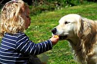 3 year-old girl feeding her golden retriever dog.