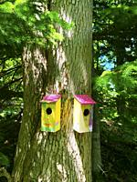 Two colorful bird houses in a nature reserve, Halifax, Nova Scotia, Canada. Visitors are encouraged to leave bird feed, especially in winter months, t...