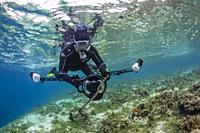 Banded sea krait, Laticauda colubrina, with photographer on Sebayur Island, Flores Sea, Indonesia.