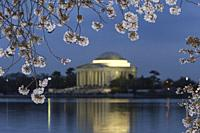 Yoshino cherry tree blossoms frame the Jefferson Memorial on the Tidal Basin at twilight in Washington, DC.