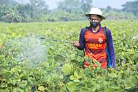 Farmer Spraying Pesticide at khulna, Bangladesh.
