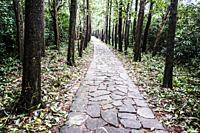 My Son Sanctuary. Pathway to archaeological site. UNESCO World Heritage Site, Quang Nam Province, Da Nang, Vietnam, Southeast Asia.
