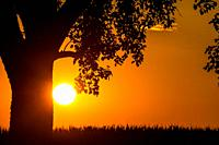 sunset in summertime with tree.