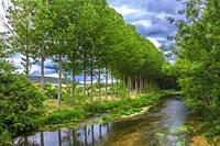 Poplar grove and Ega river. Murieta, Navarre, Spain, Europe.
