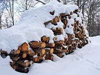 Beech tree (Fagus sylvatica) trunks pile after snowfall. Montseny Natural Park. Barcelona province, Catalonia, Spain.