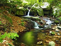 Riera de les Truites stream, Arbucies village countryside. Montseny Natural Park. Barcelona province, Catalonia, Spain.