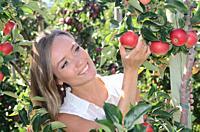 Young smiling woman picking red apples in Österlen fruit district in Rörum, Scania, Sweden.