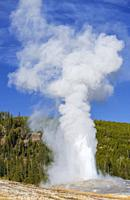 Old Faithful geyser, Yellowstone National Park, USA.