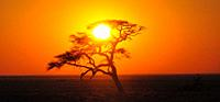 Namibia: A tree shadow at sunset in Etosha National Park.