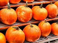 Pumpkins Displayed at an Outdoor Manhattan, NYC Food Market