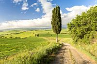 A pathway across the rolling hills in Orcia valley, Siena province, Tuscany, Italy.