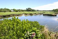 Wetlands, Barnstable, Cape Cod, Massachusetts, United States.