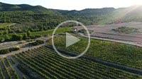 Aerial view of vineyards. Almansa. Albacete province