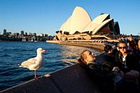 People are seen sitting at a pavement cafe along Circular Quay Quay enjoying the evening sun along with a seagull while the famous Sydney Opera House ...