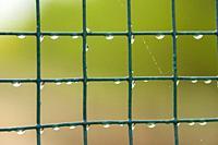 Green lattice with water drops. Almansa, Albacete province, Spain
