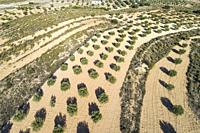 Drone view of almond orchard. Almansa, Albacete province, Spain