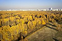 Aerial view of Bitsevski Park (Bitsa Park) with trees in golden autumn colors. Moscow, Russia.