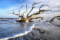 Low tide landscape at Driftwood Beach - Jekyll Island, Georgia, USA.