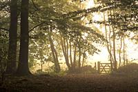 A gate at the edge of a woodland in mist at sunrise. Stockhill Wood, Mendip Hills Area of Outstanding Natural Beauty, Somerset, England.