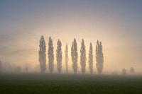 Autumn sunrise behind a row of Lombardy Poplar trees at the recreation ground in the North Somerset village of Wrington. These trees are a memorial to...