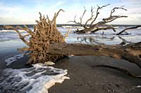 Driftwood Beach Landscape - Jekyll Island, Georgia, USA.