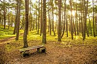 forest of the Baltic sea in Poland with bench.