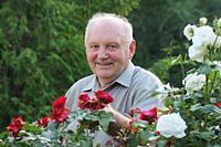 Portrait of old man - grower of roses next to rose bush in his beautiful garden;.