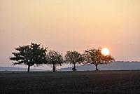 pommiers dans un champ au coucher du soleil, departement d'Eure-et-Loir, region Centre-Val de Loire, France, Europe/apple trees in a field at sunset, ...