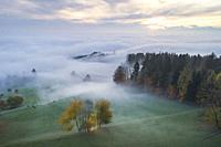 fog and forest in fall, Switzerland.