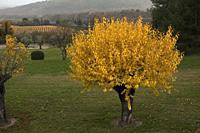 France, Provence, Vaucluse, autumn landscape in the Luberon.