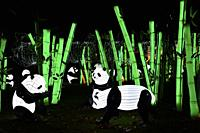 France, Tarn, Gaillac, Festival des lanternes (Chinese Lantern Festival), Illuminated pandas and bamboo forest. . The festival celebrates Chinese cult...