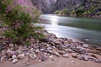 The Colorado River and Grand Canyon at False Trinity Camp (mile 91. 5), Grand Canyon National Park, Arizona, USA.