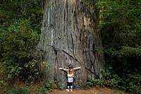 Young girl hugging a large tree along the Lady Bird Johnson Grove Trail in the California Redwoods National Park in coastal Northwest California.