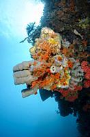 Tube sponge (Porifera phylum), coral (Tubastraea faulkneri) and crinoid (Crinoidea Class) with sun in background, The Cove dive site, Atauro Island, E...