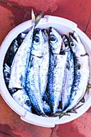 various mackerels in a bowl, cleaned and ready for grilling, algarve, portugal.