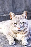 grey-brownish cat on a stone panel, lisbon, portugal.