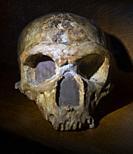 """France, Occitanie, Haute Garonne, """"""""Homo Sapiens Neanderthalensis"""""""".45 years old. """"""""La Chapelle aux Saintes, Correze)."""