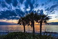 Palm trees silhoutted by dramatic blue sky with dark clouds at sunset at Caspersen Beach on the Gulf of Mexico in Venice Florida.