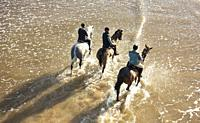 Saltburn by the sea, North Yorkshire, England, United Kingdom. Horses out for a morning gallop pass under Saltburn`s Victorian pier.