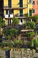 Italy, Liguria, Cinque Terre National Park, World Heritage Site, Corniglia.